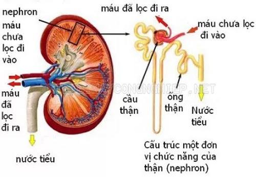 áp suất thẩm thấu của máu là gì