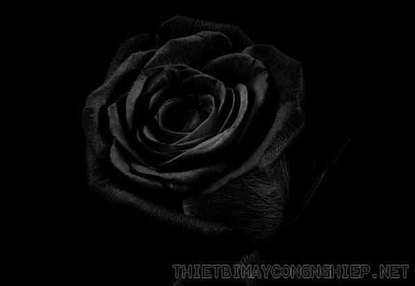 ý nghĩa màu đen là gì