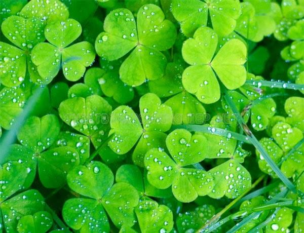 ý nghĩa màu xanh lá cây