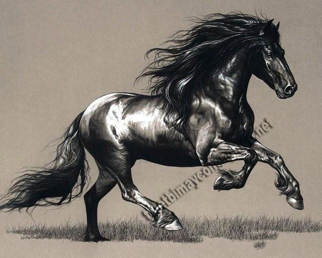 mơ thấy ngựa đen