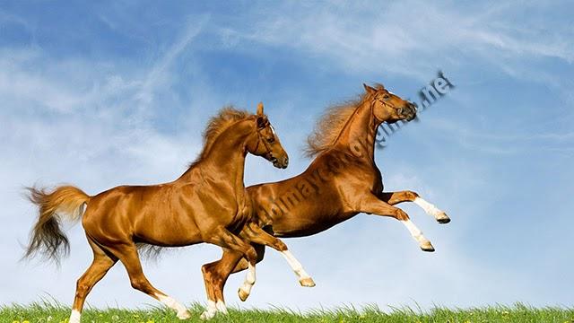 mơ thấy ngựa vàng