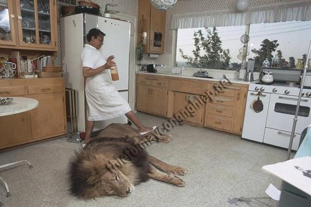 mơ thấy sư tử trong nhà