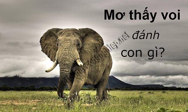mơ thấy voi đánh con gì